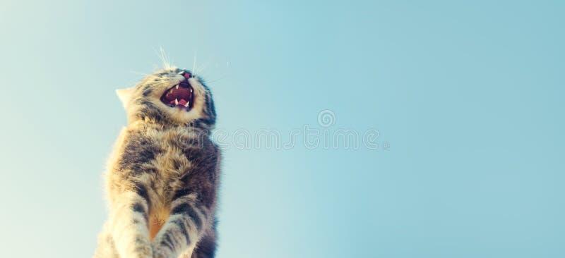 E Katze im Himmel Ein Haustier Schönes Kätzchen fahne Platz für Text stockbild
