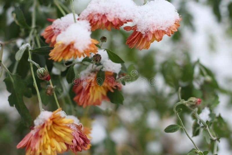 E L'inverno è venuto Macro fotografia stock libera da diritti