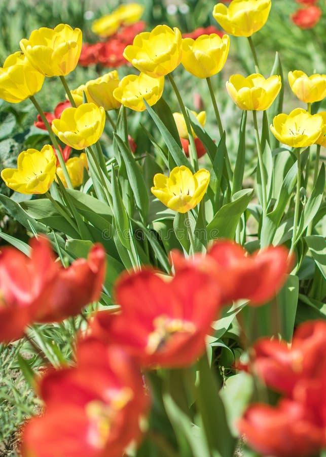 E Lit de fleur un jour ensoleillé d'été Belle flore photo libre de droits