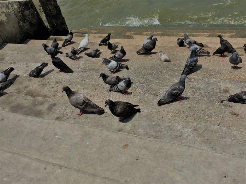 E Menigte van duif op de het lopen straat r r royalty-vrije stock foto's