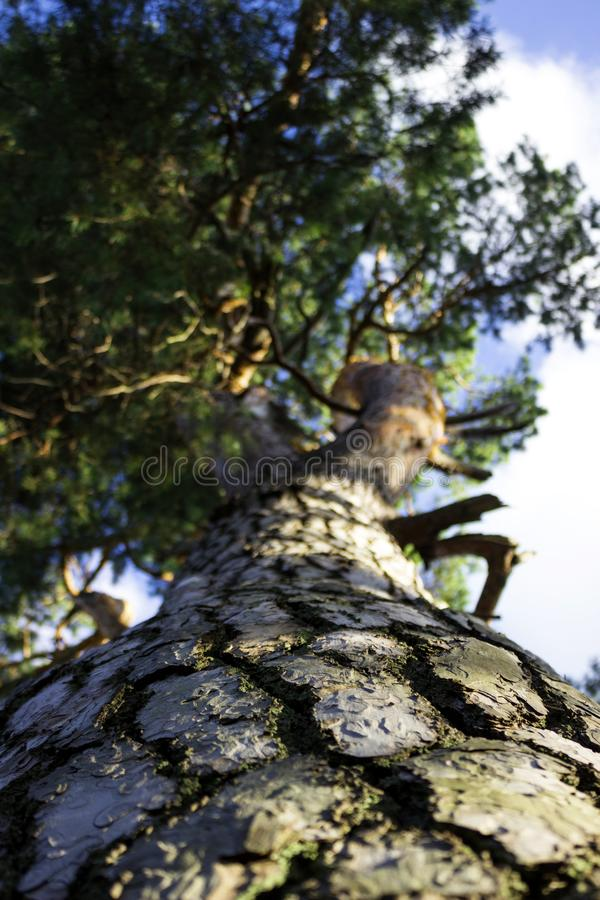 E Natur, Wald stockfotografie