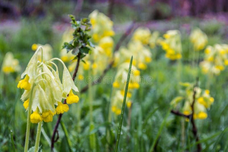 E Natura w Tekeli Wiosna kazakhstan zdjęcia stock