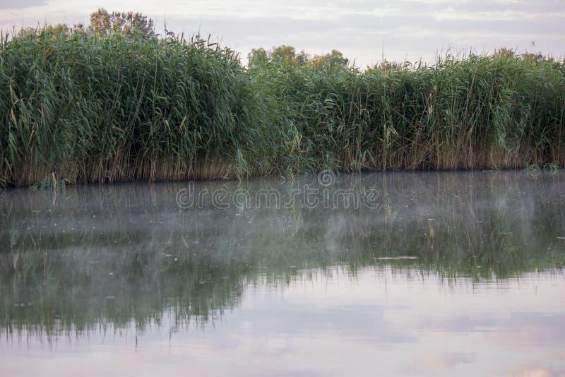 E Nelle prime ore del mattino con nebbia sull'acqua Selvaggio naturale fotografie stock libere da diritti