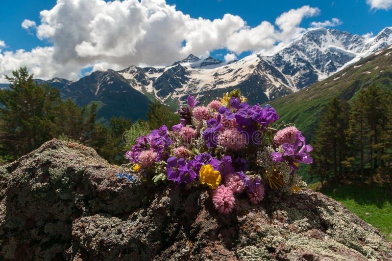E Paisagem da montanha Flores da montanha imagens de stock