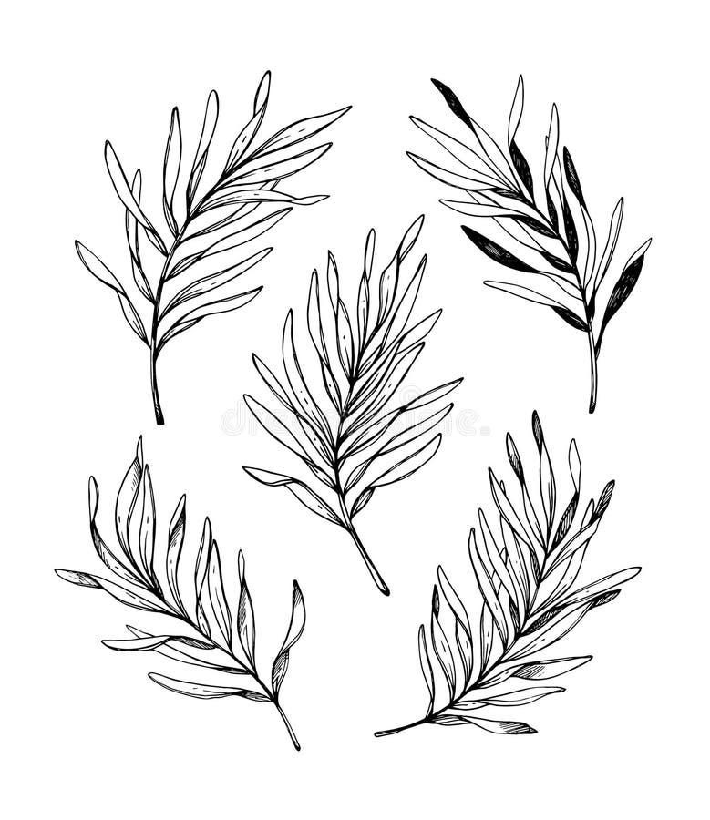 E Palmbladen De grafische Elementen van het Ontwerp r vector illustratie