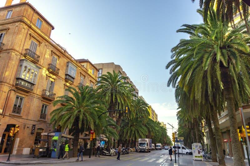 E 03 2019: Palmeras grandes en la calle de Alameda de colon en la ciudad del paisaje urbano mediterrean de Málaga España fotografía de archivo libre de regalías