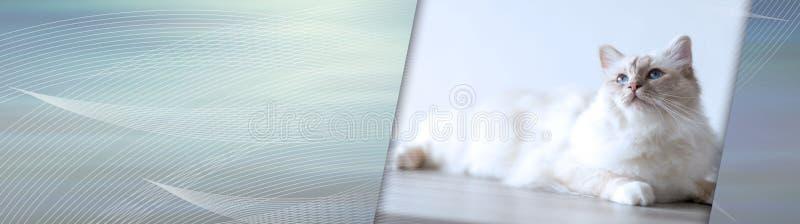 E Panoramische Fahne stockfotos