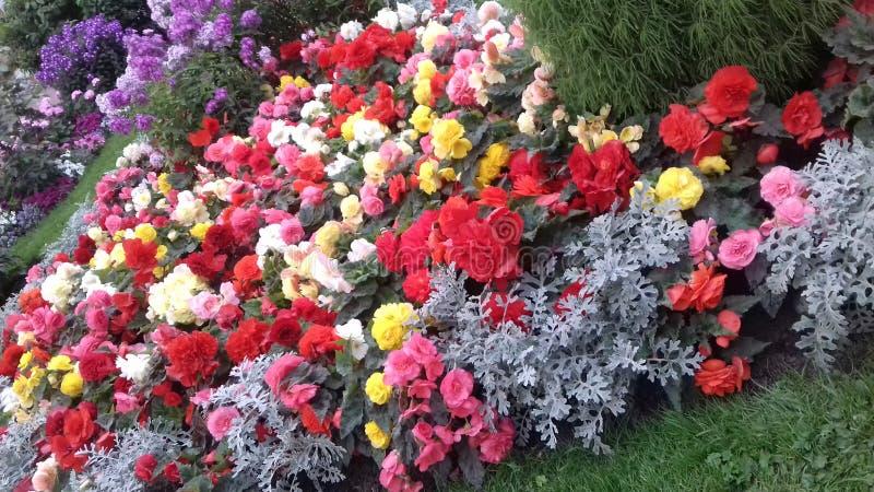 E più fiori fotografia stock libera da diritti