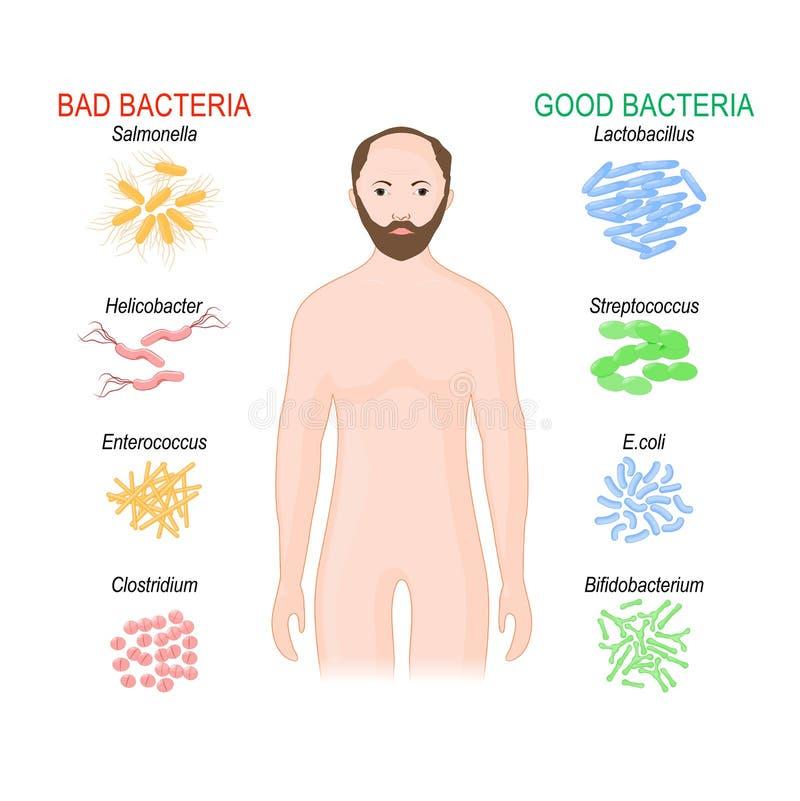 E Probiotics ?y?ek flory royalty ilustracja