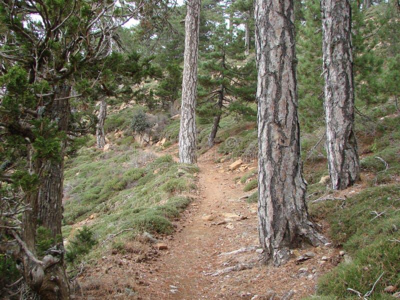 Кипр Троодос Панорама диких горных лесов на высоте 1900 метров над уровнем моря стоковое изображение rf