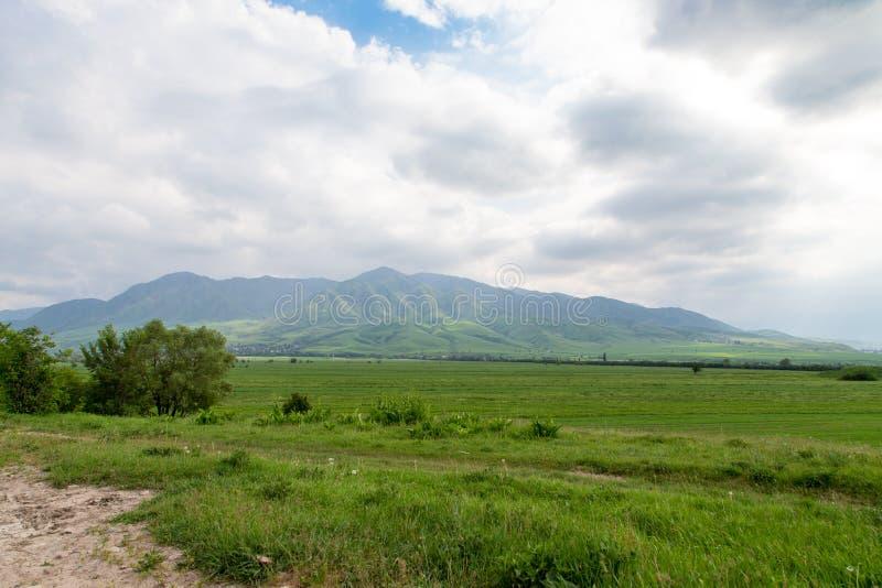 Прекрасный весенний и летний пейзаж Горы, горы Зеленая трава Весенняя цветущая трава стоковое изображение