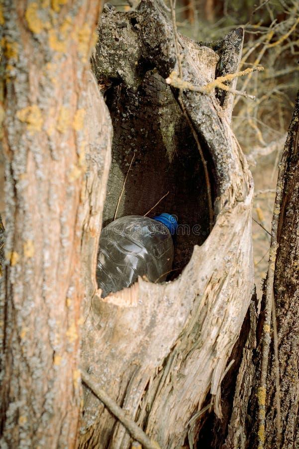 在树的空洞里 性质 自然保护观,生态 森林中的塑料瓶 库存照片