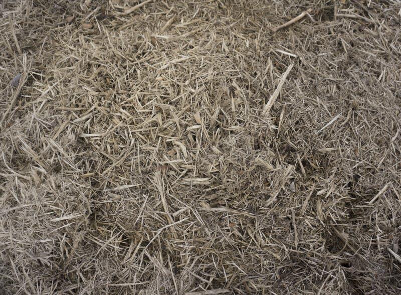 Avfettning av det gamla rostade träetsPlinters Textur för dekorativa träflis Naturligt materialmönster hos gult trä p royaltyfria foton