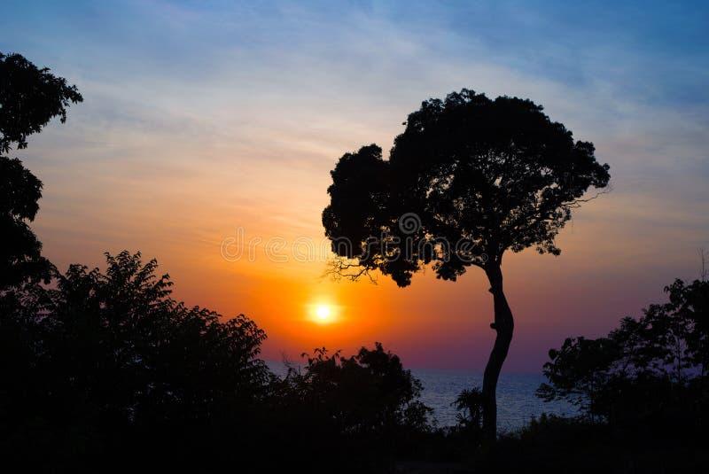 Soleil bleu orange vif. Silhouette d'arbre foncé sur fond de ciel. Voyage d'été sur l'île tropicale photos stock