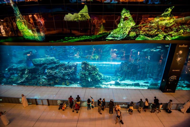 阿联酋迪拜 — 2018年10月:迪拜购物中心水族馆 — 世界最大的购物中心 — 迪拜伯杰市中心 图库摄影