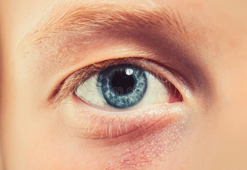Blå öga med blond ögonfransar och brosk Ögon utan makeup Naturlig skönhet och ingen smink arkivbilder