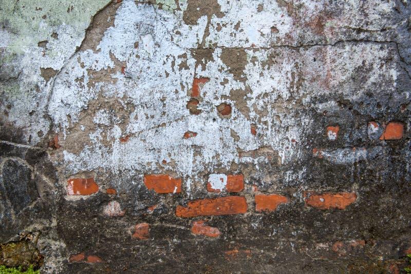 与青苔和破裂的膏药的墙壁纹理 免版税库存照片
