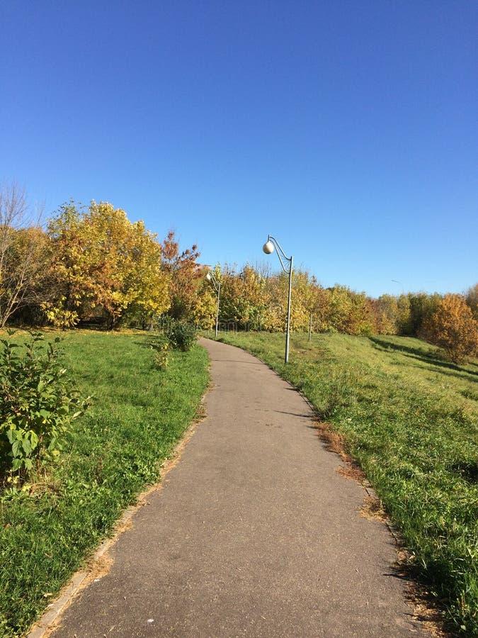 道路在秋天公园 库存图片