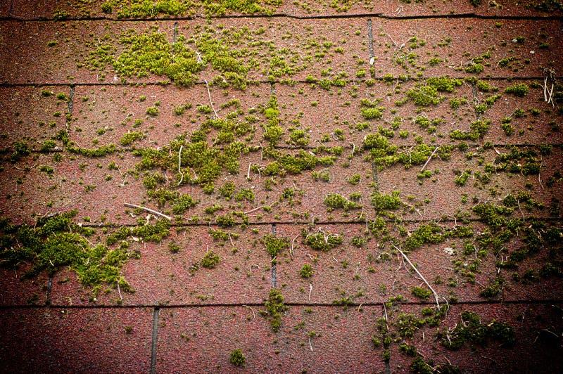 用绿色青苔盖的屋顶 E 库存照片