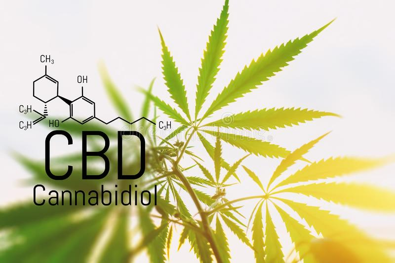 大麻概念作为一种普遍的补救办法,药用CBD油 将大麻用于药用目的的构想 大麻有机 库存照片
