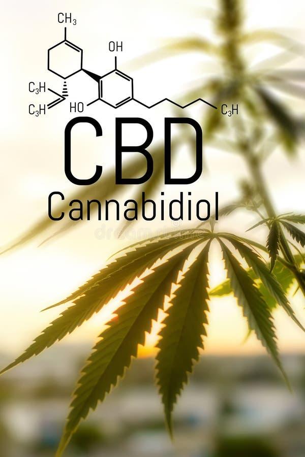 大麻概念作为一种普遍的补救办法,药用CBD油 将大麻用于药用目的的构想 大麻有机 库存图片