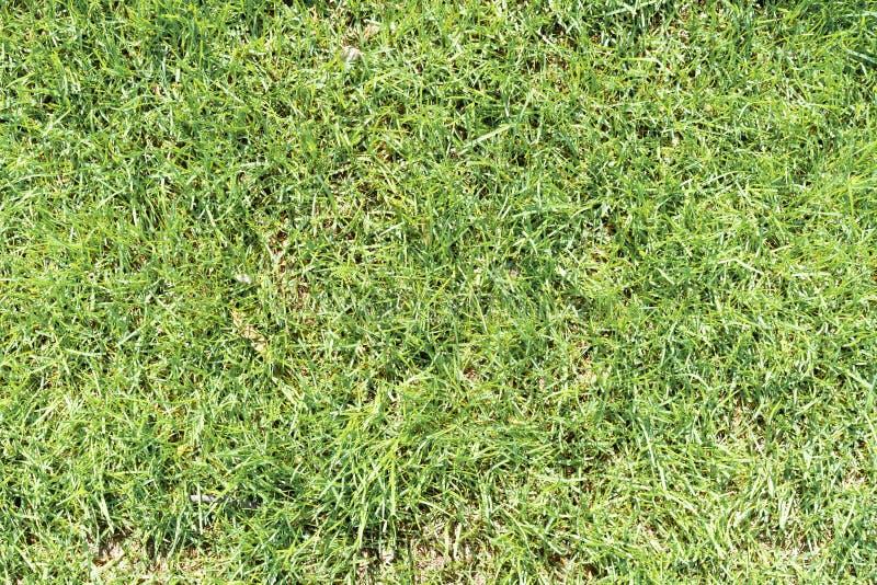 绿草在一明亮的好日子整理了作为自然本底 免版税库存照片