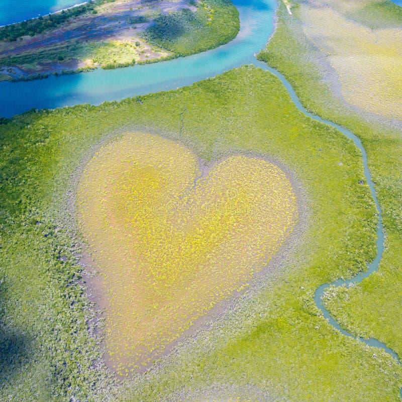 Hart van Voh, luchtaanzicht, mangroves bomen van bovenaf gezien, Nieuw-Caledonië, Micronesia Hart van de Aarde Aarde van bovenaf royalty-vrije stock foto