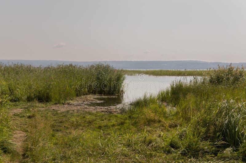 Longo rio azul fluindo lentamente através do prado verde e montanhas sem reflexões Muitas ervas altas ao redor Hora de Verão imagens de stock royalty free