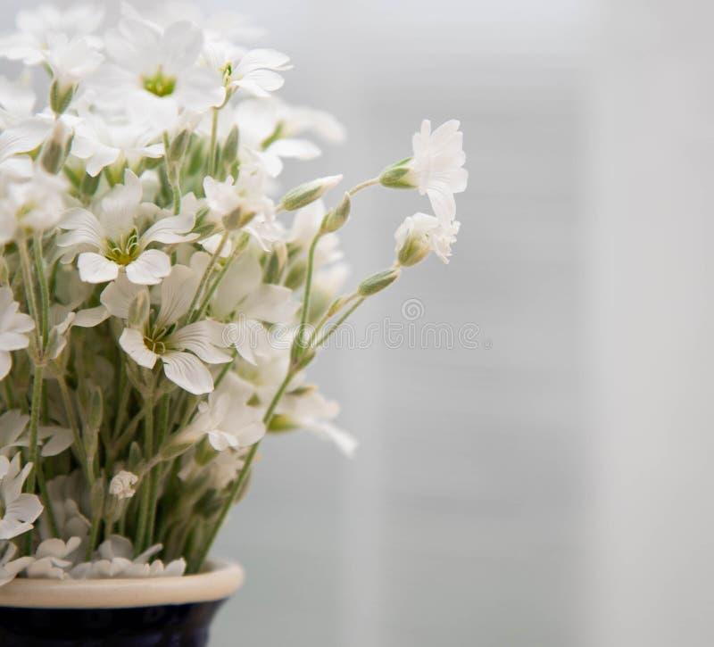 Witte kleine bloemen in een vaas Een boeket van bloemenyaskolki in een ceramische vaasclose-up Bloemen in een vaas op een witte a stock fotografie