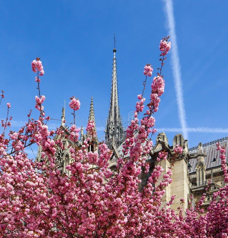 Catedral de Notre Dame, florescente de cerejeira Primavera em Paris França 05 de abril de 2019 Antes do incêndio imagem de stock