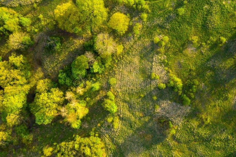 Grönt naturperspektiv Bakgrund för gröna växter ovanifrån Sommarkaraktär royaltyfri bild