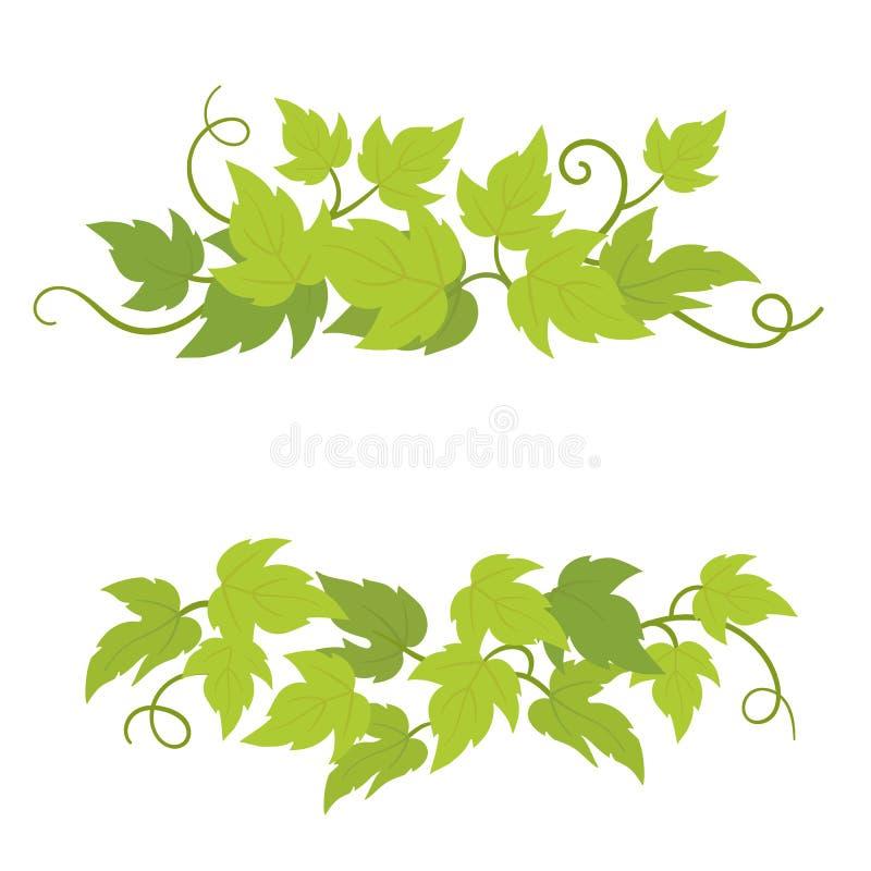 Zierelemente für Traubenpflanzen Grapevinen grüne Laubblätter Dekoration Vector flache Illustration Isoliertransparenter Hintergr lizenzfreie abbildung