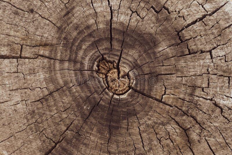 Closeuse abstraite de la coupe transversale du tronc d'arbre Séquence vintage Arrière-plan en bois Espace vide Arrière-plan Textu photographie stock libre de droits