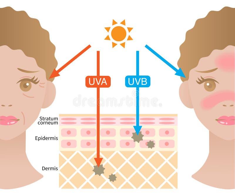 Infografische illustratie van het verschil tussen UVA- en UVB-stralen UV-penetratie in de menselijke huid en het gezicht van vrou vector illustratie