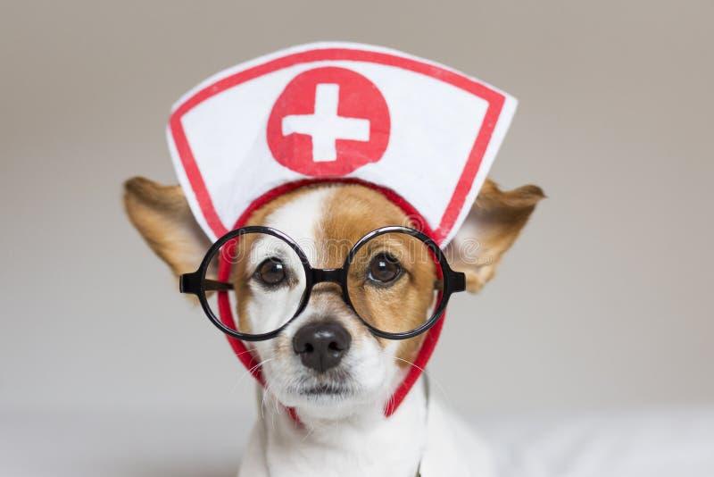 Portret van een schattige kleine hond die op bed zit Stethoscoop en bril dragen Hij lijkt op een dokter of een dierenarts Thuis,  royalty-vrije stock fotografie