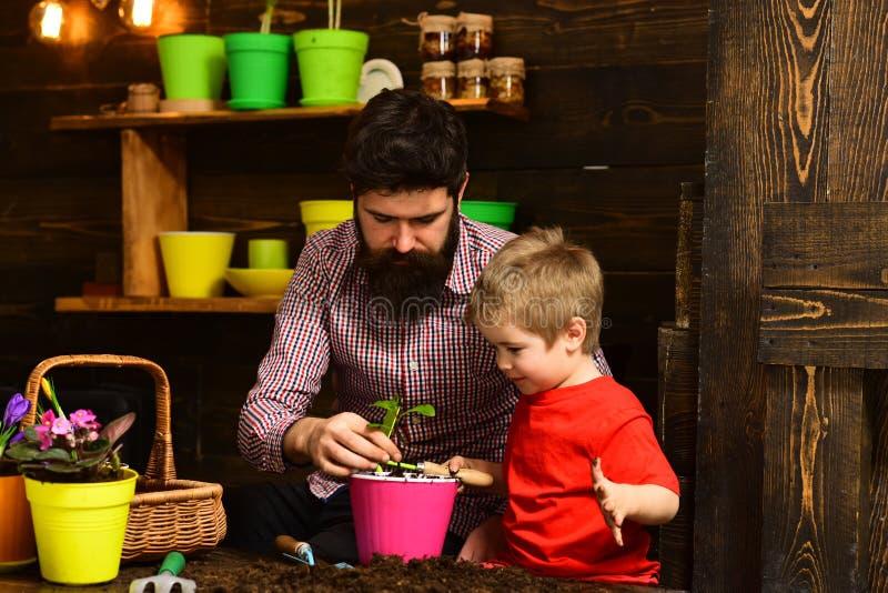 Πατέρας και γιος Ημέρα των πατέρων Ημέρα της οικογένειας Θερμοκήπιο Λουλουδοτροφή Λιπάσματα εδάφους χαρούμενοι κηπουροί με άνοιξη στοκ εικόνες με δικαίωμα ελεύθερης χρήσης