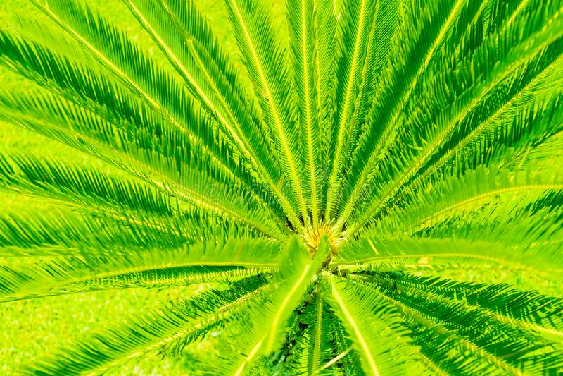 Creative tropische Palmenblätter mit grünem Licht beleuchtet Sommerrabatt-Kreativkonzept Lebhafte Farben stockbilder