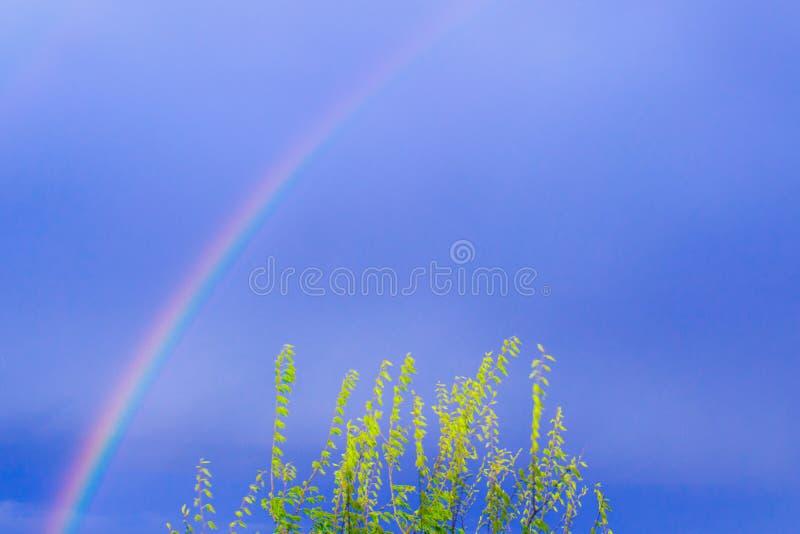 Blauer Himmelshintergrund mit Regenbogen und grünen Blättern Mediation, Klima, Umwelt, Meteorologie Kopierraum lizenzfreies stockbild