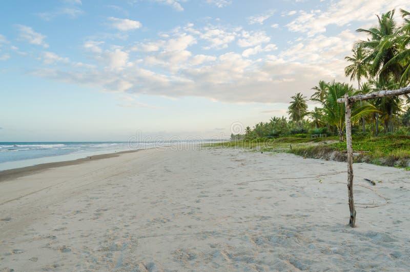 Praia do deserto no final da tarde, horizonte limpo À direita da foto, vegetação e coqueiros verdes nuvens no céu foto de stock