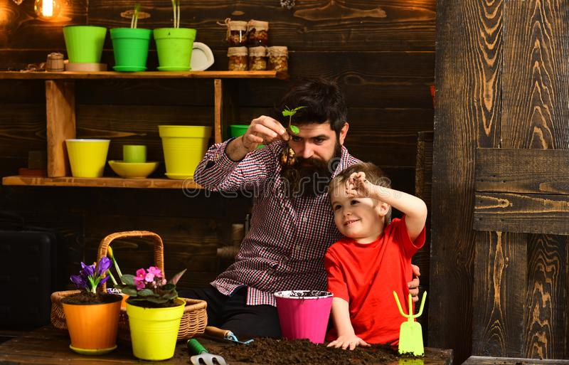 Πατέρας και γιος Ημέρα της οικογένειας Θερμοκήπιο γενειοφόρος άνδρας και μικρό παιδί αγαπούν τη φύση χαρούμενοι κηπουροί με άνοιξ στοκ φωτογραφία με δικαίωμα ελεύθερης χρήσης