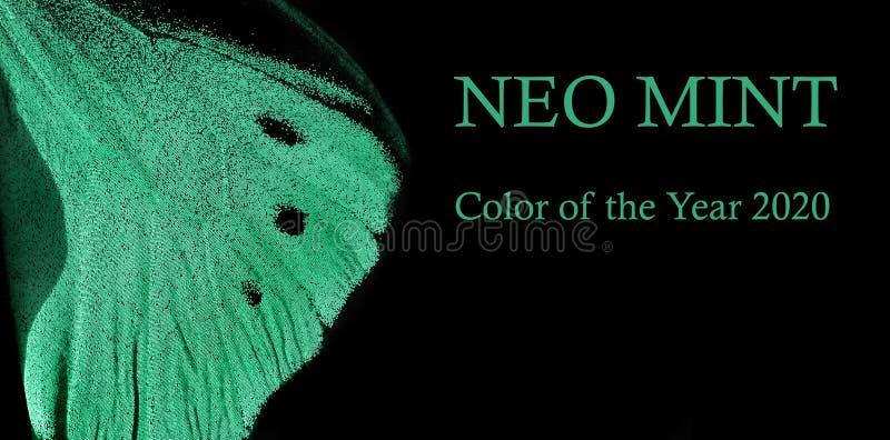 Χρώμα Trendy mint Πτέρυγα τροπικής πεταλούδας σε μαύρο φόντο αντιγραφή κενών στοκ εικόνες