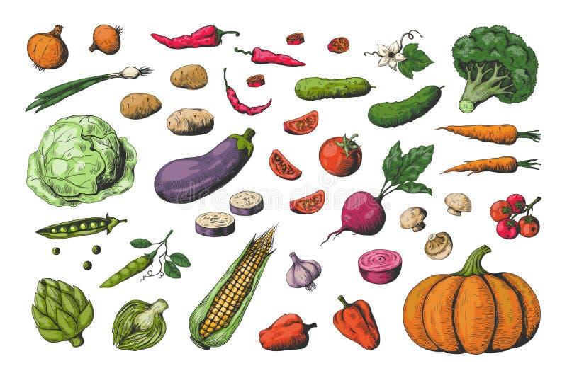 Рисованные вручную цветные овощи Сбор эскизов продуктов питания, здоровые овощи в веганском саду Векторный морковь иллюстрация вектора