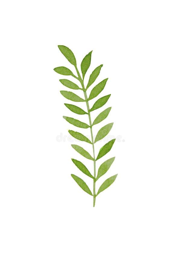 Handgetrokken waterverftropische plantenblad Exotisch, zomerblad, blad Ontwerpsjabloonelement vector illustratie