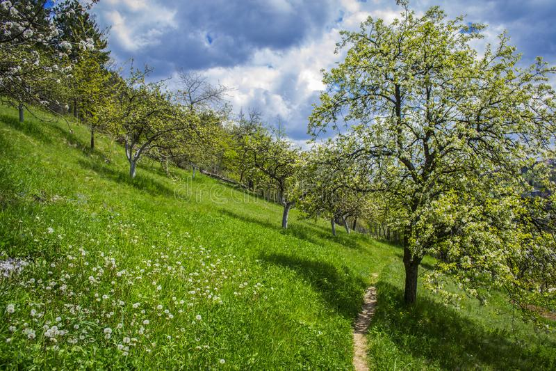 自然美人美丽的景色  春天风景的看法 美丽的天空和云彩在背景中 库存照片