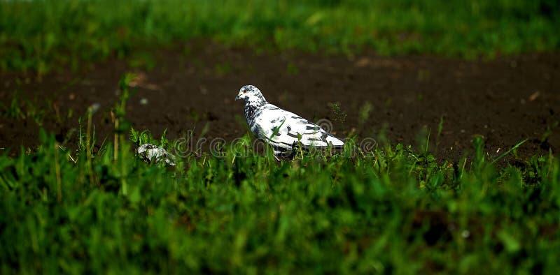 Цветы живут флора земля природа птица стоковая фотография rf