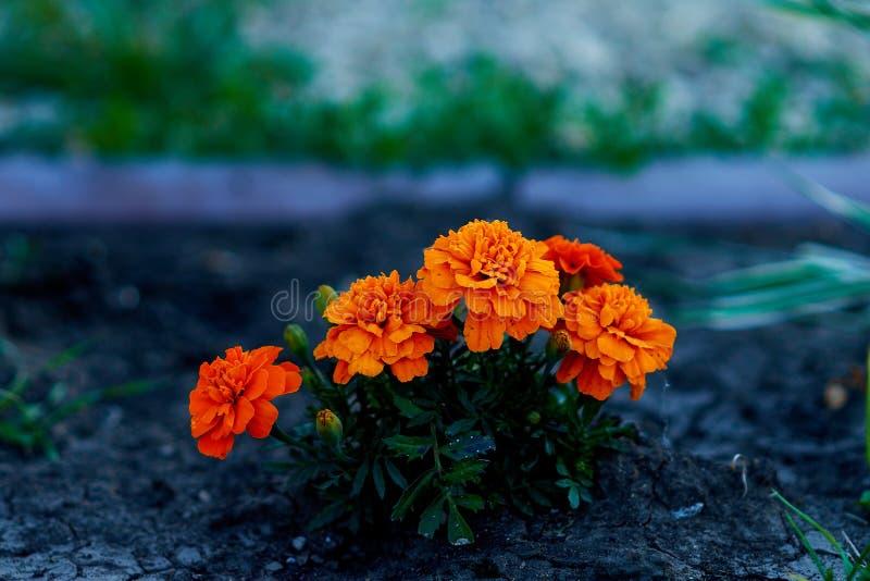 Цветы живут флора земля природа стоковые изображения rf