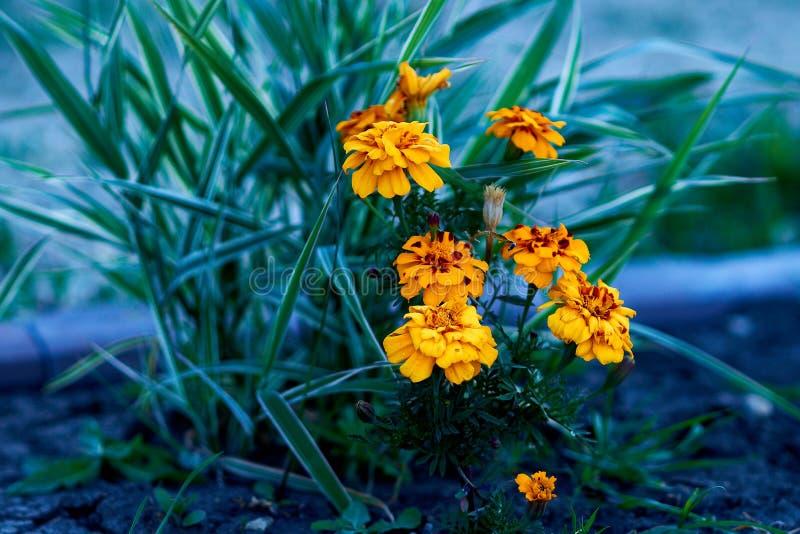 Цветы живут флора земля природа стоковые фото