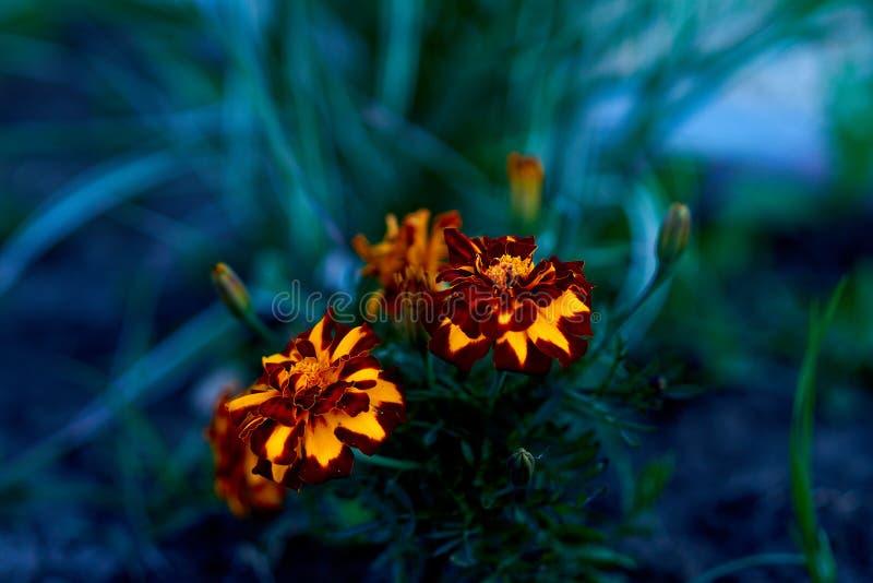 Цветы живут флора земля природа стоковое фото rf
