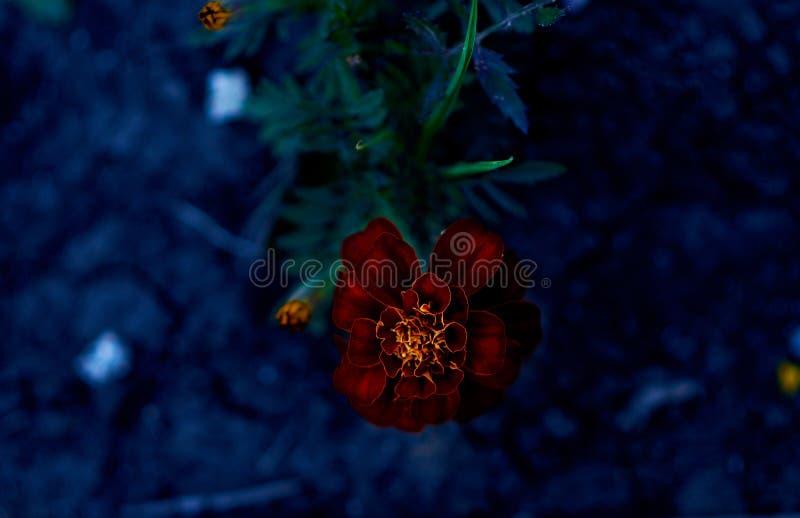Цветы живут флора земля природа стоковая фотография rf