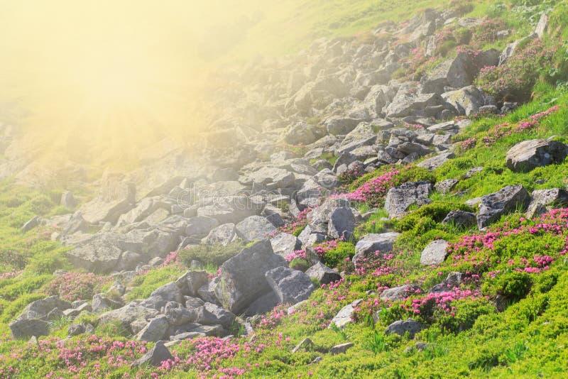 Фэнтези Волшебные лесаКрасивые весенние пейзажи деревья и цветок в цветке стоковое изображение rf
